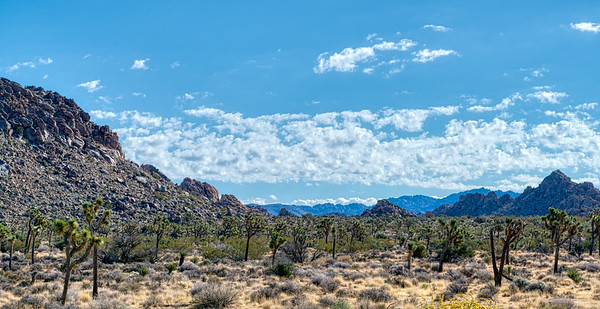 Joshua Tree National Forrest