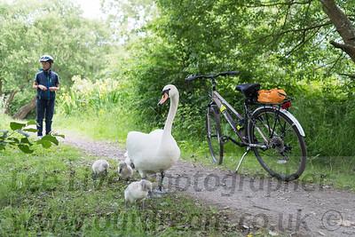 2018 Straiton Swans