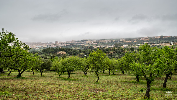 Over the trees and in the distance, the city of Agrigento can be seen in the hills.