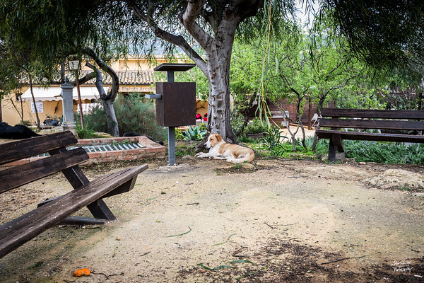 A dog lazing outside the nearby restaurant