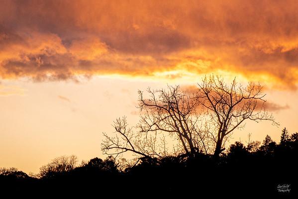Eagle Tree Sunset