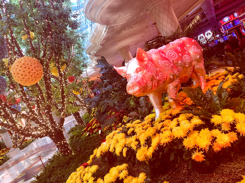 The Year of the Pig at Encore