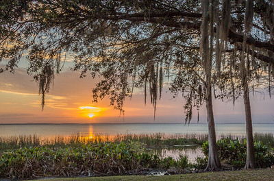 Lake Apopka Sunset