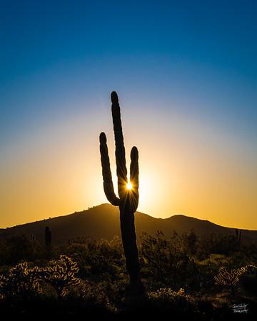 Sonorian Desert Sunrise