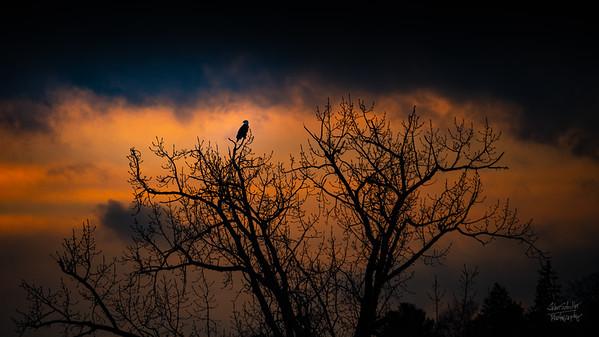 Eagle Sunset