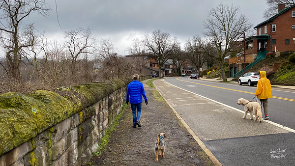 Social distance walking along Beechwood Boulevard. as the old stone wall's green cast reminds us that spring is starting here.