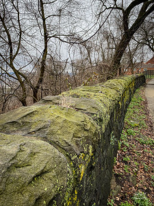Even before Spring has started, I'm starting to notice emerging color.  All our walking starts along Beechwood Boulevard.  And walking, of course,, provides you with a lot of time to take in  what's in front of you - - like this old wall stone hued in stained green along the sidewalk.