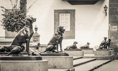Los perros de la catedral de Santa Ana
