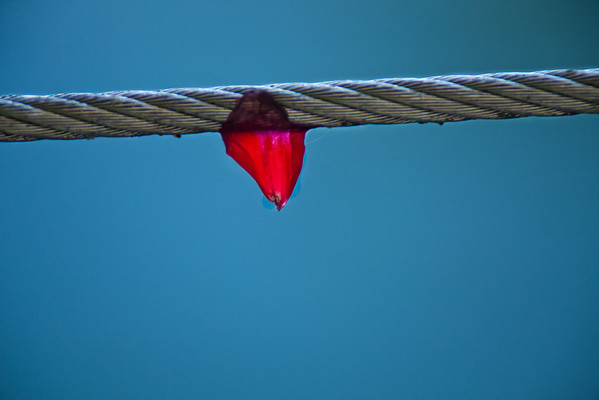 A Flower Tooth on a Wire Saw