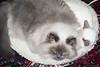 041019_cats_0006