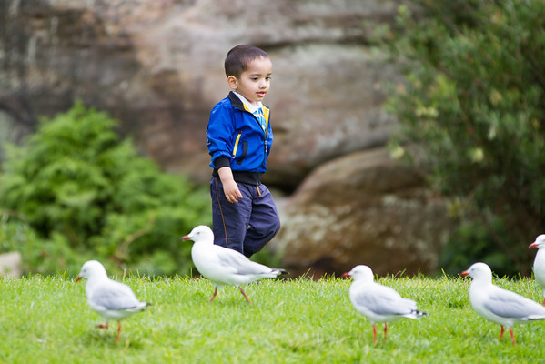 playing with the birds