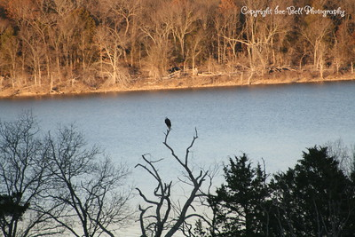 20111228-EagleOnTableRockLake-04