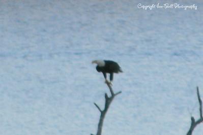 20111228-EagleOnTableRockLake-18
