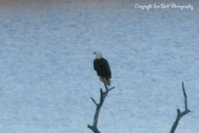 20111228-EagleOnTableRockLake-12