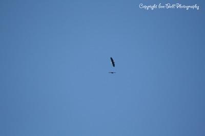 20121212-BaldEagles-05