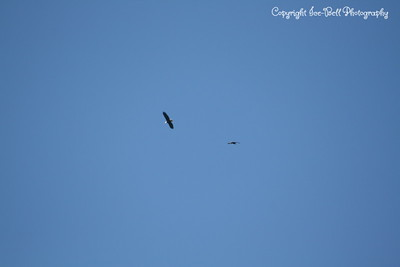 20121212-BaldEagles-06