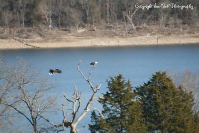 20121213-BaldEagles-08