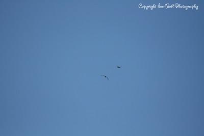 20121212-BaldEagles-01