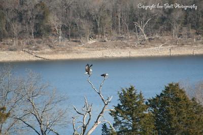 20121213-BaldEagles-12