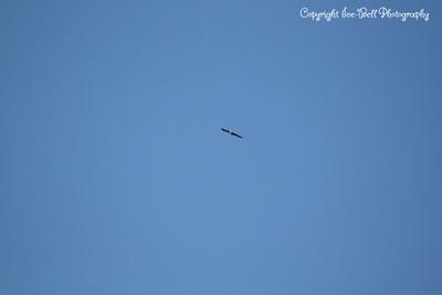 20121212-BaldEagles-04