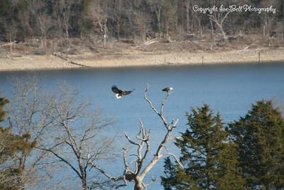 20121213-BaldEagles-09