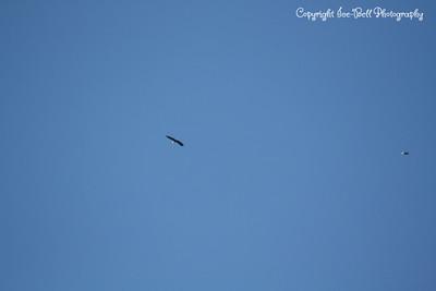 20121212-BaldEagles-10