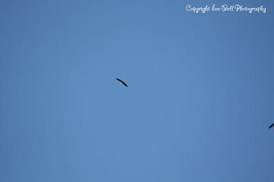 20121212-BaldEagles-09