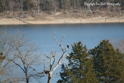 20121213-BaldEagles-01
