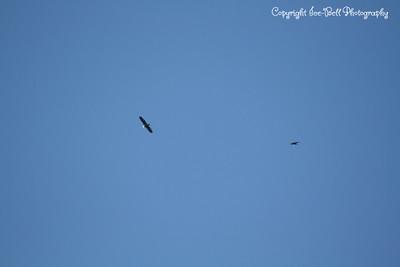 20121212-BaldEagles-07