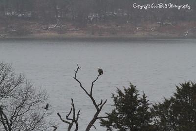 20131214-BaldEagles-01