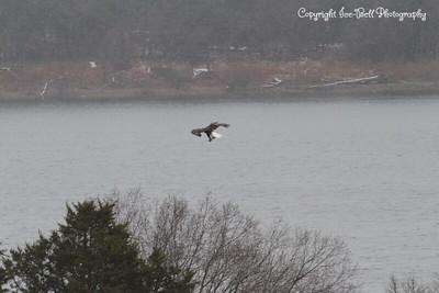 20131214-BaldEagles-15