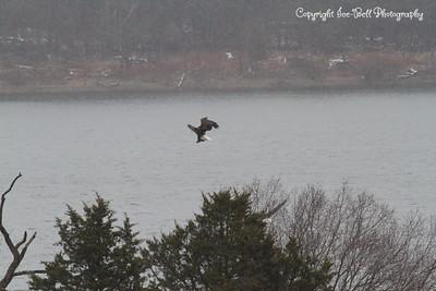 20131214-BaldEagles-18