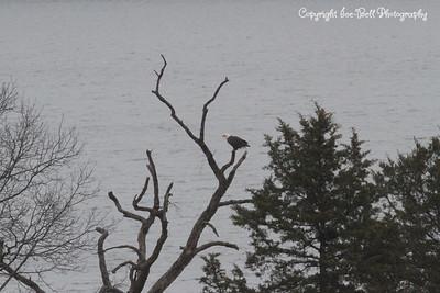 20131214-BaldEagles-10a