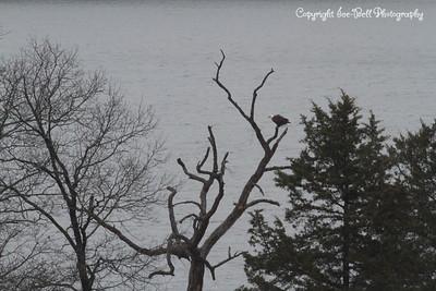 20131214-BaldEagles-08