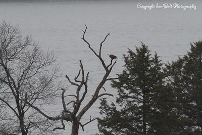 20131214-BaldEagles-10