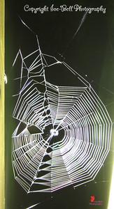 20160825-Spiderwebs-01wm