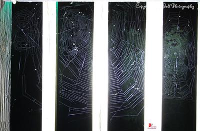 20160825-Spiderwebs-03wm