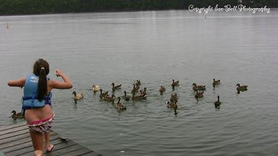 20070908-DucksBeingFeedBaylee-03