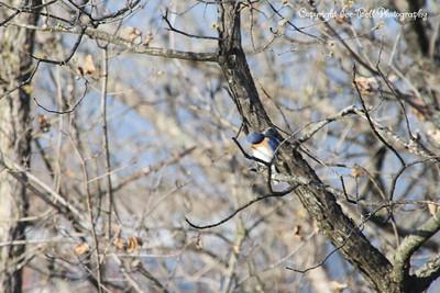 20130406-BlueBird-04