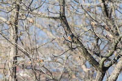 20130406-BlueBird-01