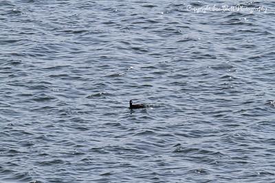 20130401-Duck-01