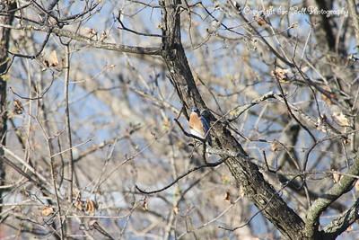 20130406-BlueBird-06
