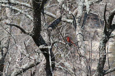 20130331-Cardinal-01
