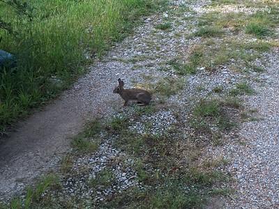 20140829-Bunny-01
