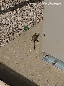 20140428-Lizard-01