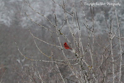 20150304-Cardinal-02