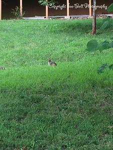 20150727-BunnyRabbit-01