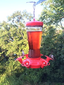 20150812-HummingBirds-08