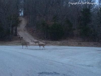 20150321-Deer-02