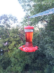 20150812-HummingBirds-01